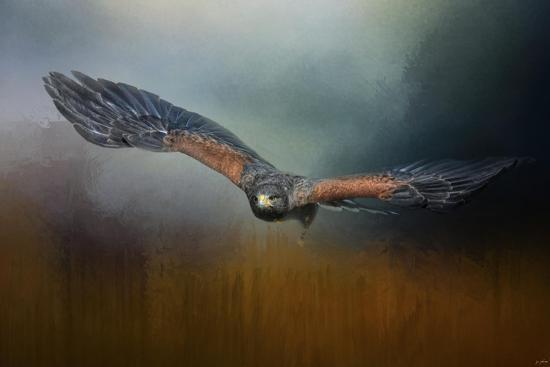 Flight of the Harris Hawk-Jai Johnson-Giclee Print