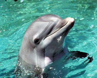 Flipper--Photo