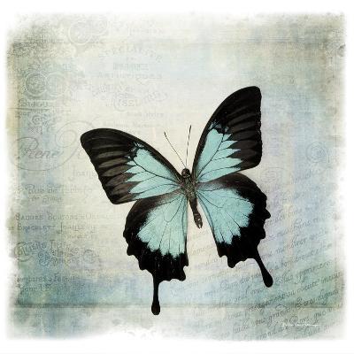 Floating Butterfly III-Debra Van Swearingen-Art Print