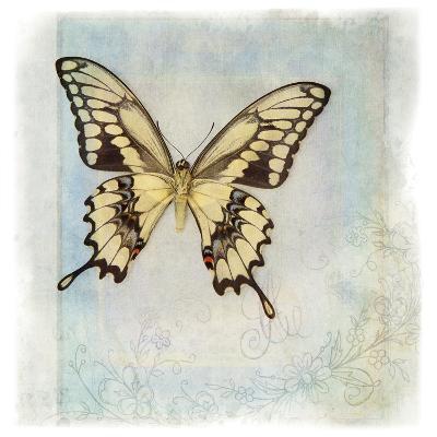 Floating Butterfly V-Debra Van Swearingen-Art Print