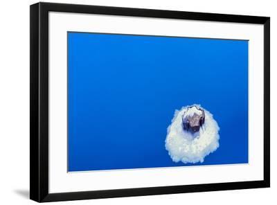 Floating Pillar-NjR Photos-Framed Giclee Print