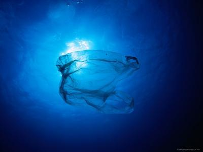 Floating Plastic Bag Dangerously Resembles a Sea Jelly-Robert Halstead-Photographic Print