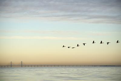 Flock of Birds Flying near Bridge- BMJ-Photographic Print