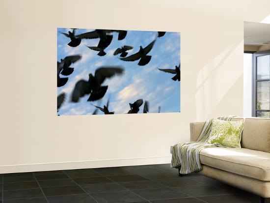 Flock of Birds-Brian Cruickshank-Wall Mural