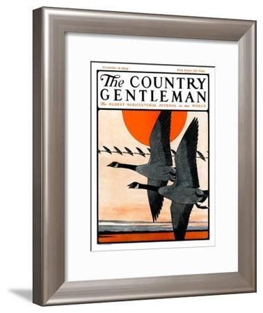"""""""Flock of Geese in Formation,"""" Country Gentleman Cover, November 15, 1924-Paul Bransom-Framed Giclee Print"""