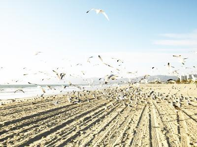Flock of Seagulls Flying Across Water and Sand--Photographic Print