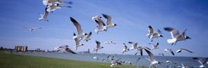 Flock of Seagulls Flying on the Beach, New York, USA