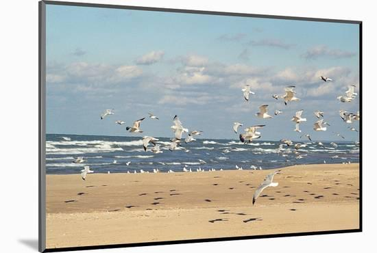 Flock of seaguls on the beaches of Lake Michigan, Indiana Dunes, Indiana, USA-Anna Miller-Mounted Premium Photographic Print