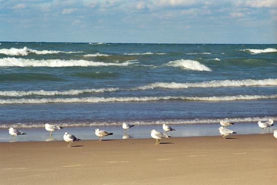 Flock of seaguls on the beaches of Lake Michigan, Indiana Dunes, Indiana, USA-Anna Miller-Photographic Print