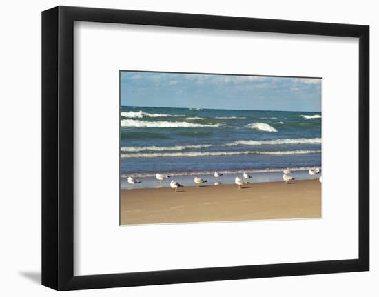 Flock of seaguls on the beaches of Lake Michigan, Indiana Dunes, Indiana, USA-Anna Miller-Framed Photographic Print