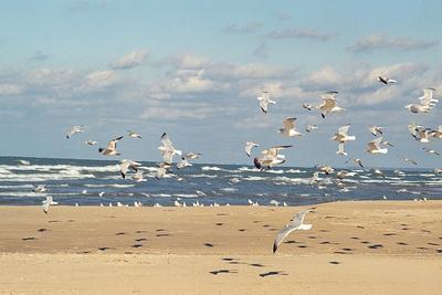 https://imgc.artprintimages.com/img/print/flock-of-seaguls-on-the-beaches-of-lake-michigan-indiana-dunes-indiana-usa_u-l-q10vw9v0.jpg?p=0