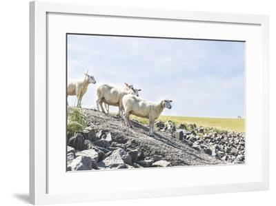 Flock of Sheep on the Dyke- Photo-Active-Framed Photographic Print