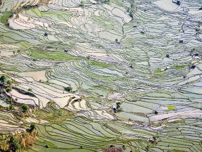 Flooded Laohu Zui Rice Terraces, Mengpin Village, Yuanyang County, Yunnan, China-Charles Crust-Photographic Print