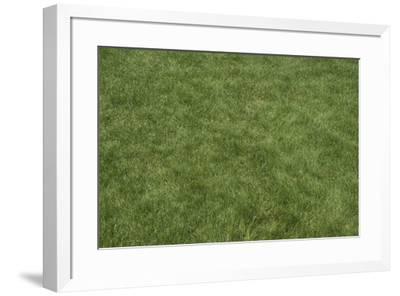 Floor Mat Grass-Color Bakery-Framed Giclee Print