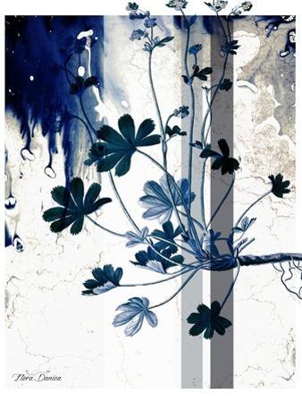 Blue Flower by Flora Danica