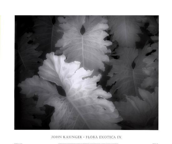 Flora Exotica IX-John Kasinger-Art Print