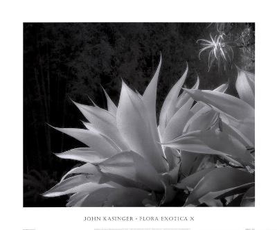 Flora Exotica X-John Kasinger-Art Print