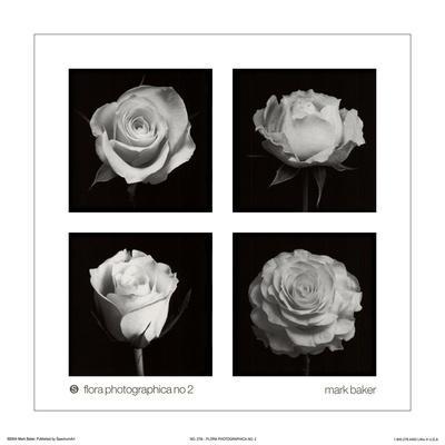 https://imgc.artprintimages.com/img/print/flora-photographica-no-2_u-l-f8ttrw0.jpg?p=0