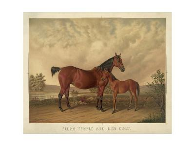 Flora Temple and Her Colt--Giclee Print