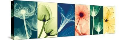 Flora-Steven N^ Meyers-Stretched Canvas Print