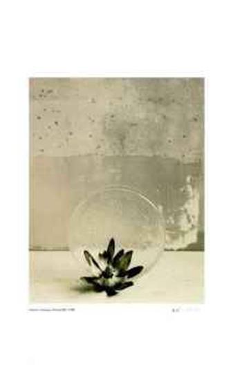 Floral #12-Adriene Veninger-Limited Edition