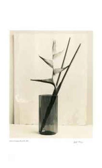 Floral #7-Adriene Veninger-Collectable Print