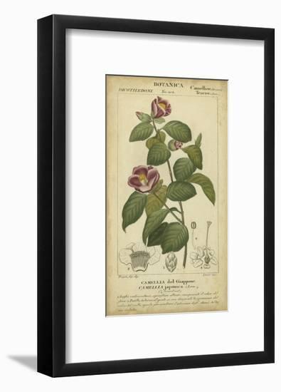 Floral Botanica III-Turpin-Framed Art Print