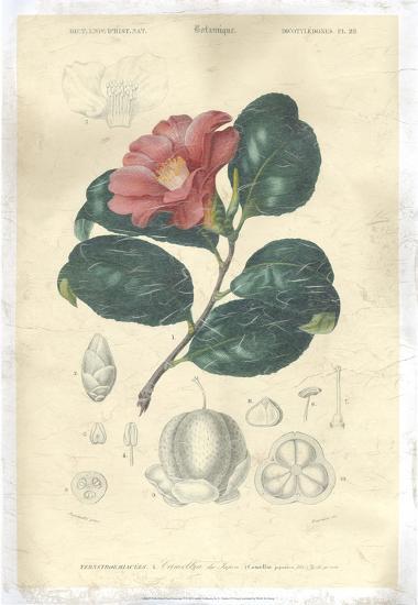 Floral Botanique II-N.Charles D'Orbigny-Giclee Print