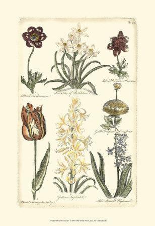 https://imgc.artprintimages.com/img/print/floral-bounty-iv_u-l-f31u4f0.jpg?p=0