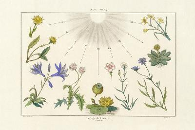 Floral Clock, 1833-39--Giclee Print