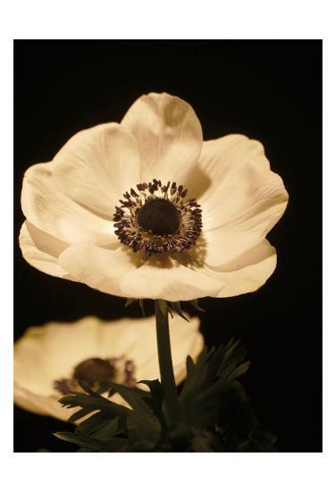 Floral Closeup 1-Kimberly Allen-Art Print