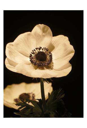https://imgc.artprintimages.com/img/print/floral-closeup-1_u-l-f8tw260.jpg?p=0