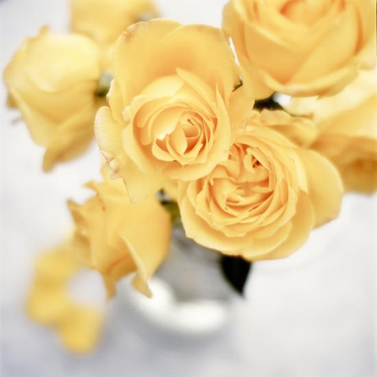 Floral Color #21-Alan Blaustein-Photographic Print