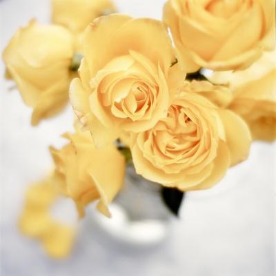 https://imgc.artprintimages.com/img/print/floral-color-21_u-l-q1b7gua0.jpg?p=0