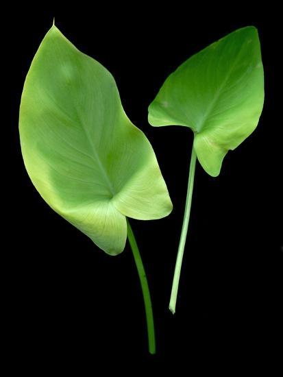 Floral Color #24-Alan Blaustein-Photographic Print