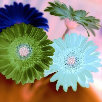 https://imgc.artprintimages.com/img/print/floral-color-2_u-l-q1b7fsz0.jpg?p=0