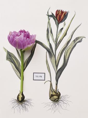 https://imgc.artprintimages.com/img/print/floral-decoupage-anthocyanin_u-l-f876mg0.jpg?p=0