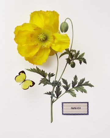https://imgc.artprintimages.com/img/print/floral-decoupage-iv_u-l-f876um0.jpg?p=0