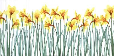 Floral Delight I-Jim Wehtje-Art Print