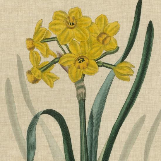 Floral Delight III-Vision Studio-Art Print