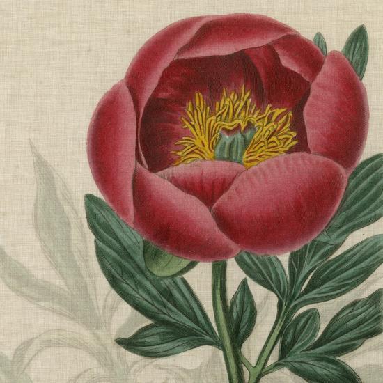 Floral Delight V-Vision Studio-Art Print