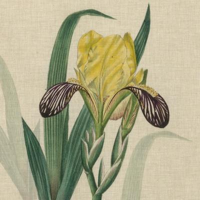 https://imgc.artprintimages.com/img/print/floral-delight-vii_u-l-pxn43y0.jpg?p=0