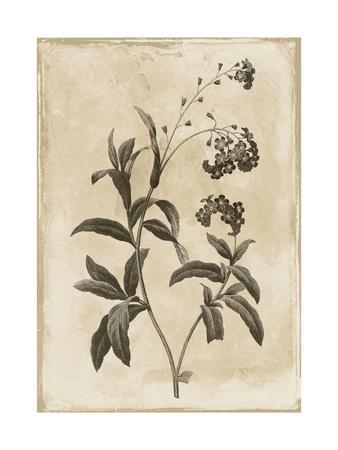 https://imgc.artprintimages.com/img/print/floral-earthtone-four_u-l-f8j2px0.jpg?p=0
