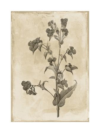 https://imgc.artprintimages.com/img/print/floral-earthtone-three_u-l-f8j2py0.jpg?p=0