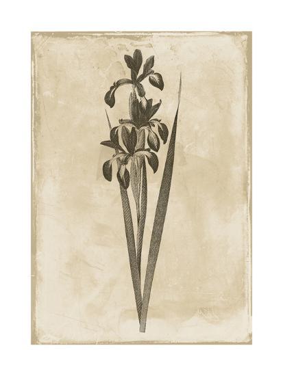 Floral Earthtone Two-Jace Grey-Art Print