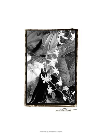 Floral Elegance I-Laura Denardo-Art Print