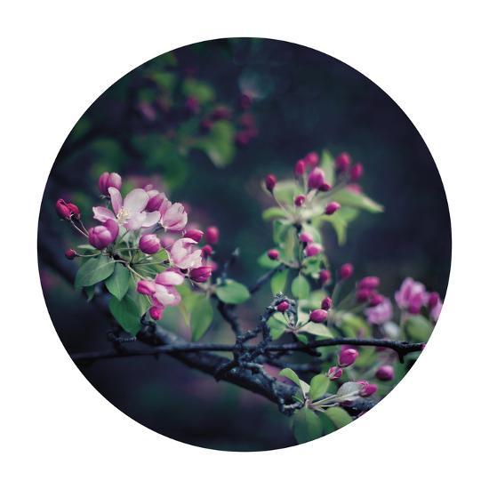 Floral Elegance - Sphere-Irene Suchocki-Giclee Print