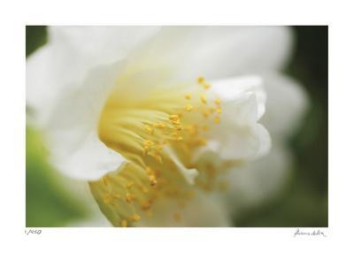 https://imgc.artprintimages.com/img/print/floral-elements-7_u-l-f5kk3n0.jpg?p=0