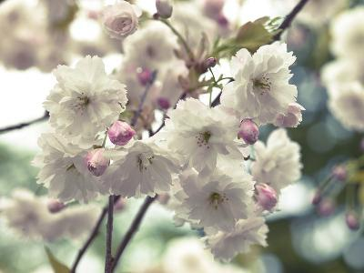 Floral Fancy-Assaf Frank-Giclee Print