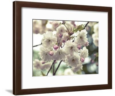 Floral Fancy-Assaf Frank-Framed Art Print